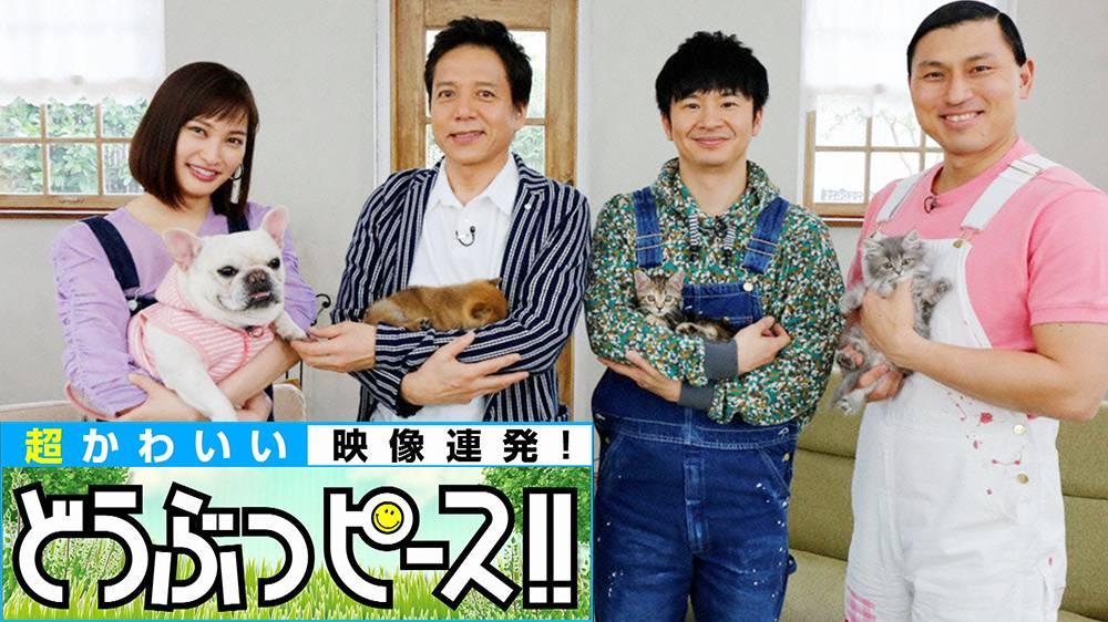 海外Jr.アイドル 日本犬赤ちゃん祭り&日本犬を初めて飼う外国人