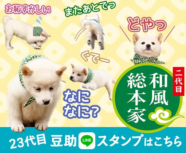 23代目豆助LINEスタンプ発売中!